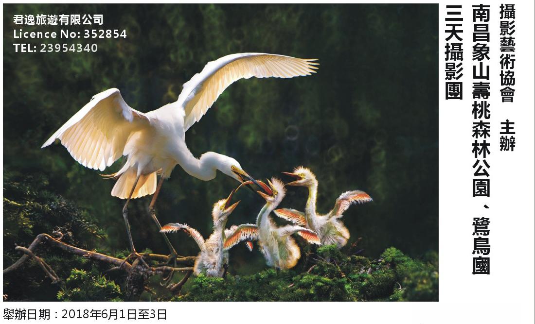 「南昌象山壽桃森林公園、鷺鳥皇國」三天攝影團2018年6月1日