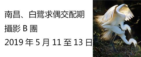 南昌白鷺求偶交配期三天攝影B團2019年5月11日至13日